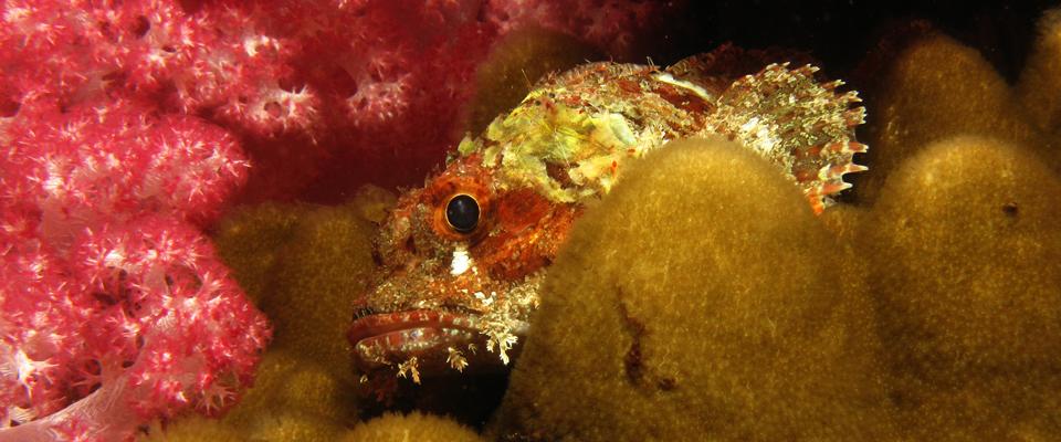 scorpionfish at stonehenge by night